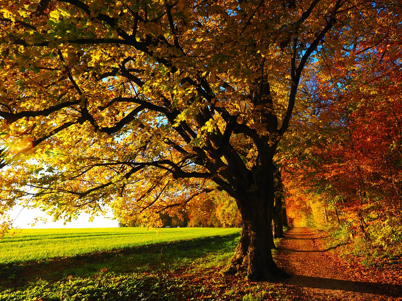 beautiful tree in fall
