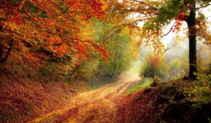 leaf peeping and other cable cold weather activities